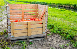 Partially filled wooden crate with harvested small orange pumpki Royalty Free Stock Photography