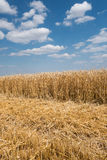 Partially harvested wheat field Royalty Free Stock Photos