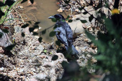 Partially Hidden Bird. A partially hidden bird stands guard over the water Stock Photos
