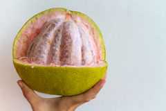 Partially Peeled Pomelo. A partially peeled pomelo held in the hand of a young woman Royalty Free Stock Image