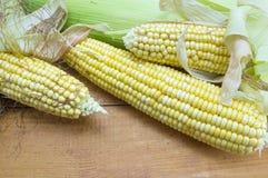 Partially revealed fresh yellow corn Stock Image