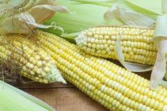 Partially revealed fresh yellow corn Stock Photos