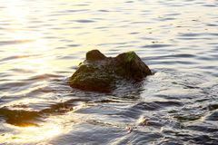 Partially submerged algae and seaweed covered rocky outcropping. At sunset Royalty Free Stock Image