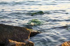 Partially submerged algae and seaweed covered rocky outcropping.  Stock Image