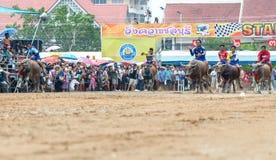 Participants buffalo racing festival run. Chonburi - OCTOBER 07 : Participants buffalo racing festival runs in 143th Buffalo Racing Chonburi 2014 on October 07 Royalty Free Stock Image