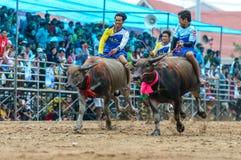 Participants buffalo racing festival run. Chonburi - OCTOBER 07 : Participants buffalo racing festival runs in 143th Buffalo Racing Chonburi 2014 on October 07 Stock Images