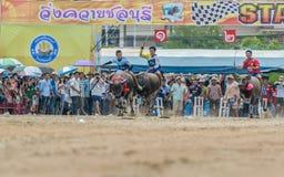Participants buffalo racing festival run. Chonburi - OCTOBER 07 : Participants buffalo racing festival runs in 143th Buffalo Racing Chonburi 2014 on October 07 Royalty Free Stock Photography
