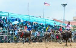 Participants buffalo racing festival run. Chonburi - OCTOBER 07 : Participants buffalo racing festival runs in 143th Buffalo Racing Chonburi 2014 on October 07 Stock Image