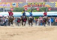 Participants buffalo racing festival run. Chonburi - OCTOBER 07 : Participants buffalo racing festival runs in 143th Buffalo Racing Chonburi 2014 on October 07 Stock Photos