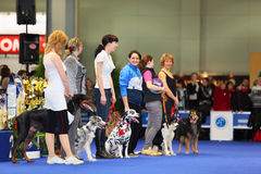 Participants of dogshow EURASIA 2011 Stock Images