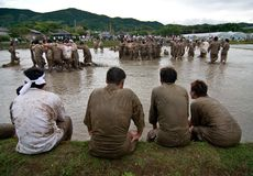 Participants of a rice festival in Japan. Kagoshima, Japan, June 3, 2007. Participants of the Seppe Tobe festival, a festival for good fortune with the rice stock image