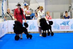 Participants in the ring on the World Dog Show Stock Photo
