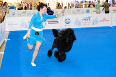 Participants in the ring on the World Dog Show Stock Photos