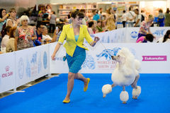 Participants in the ring on the World Dog Show Stock Image