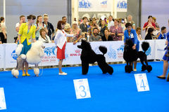 Participants in the ring on the World Dog Show Stock Images