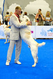Participants in the ring on the World Dog Show Royalty Free Stock Images