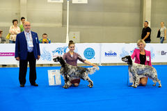 Participants in the ring on the World Dog Show Royalty Free Stock Photography