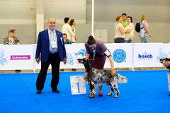 Participants in the ring on the World Dog Show Royalty Free Stock Photo