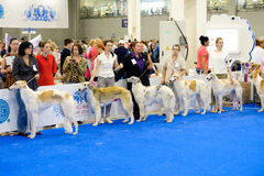 Participants in the ring on the World Dog Show Royalty Free Stock Image