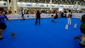 Participants in the ring on the World Dog Show stock video