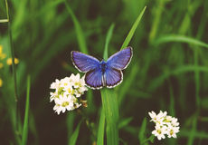The particle nature. Wild nature. The image of the insect royalty free stock photography