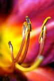 Particolare astratto del fiore. Fotografie Stock Libere da Diritti