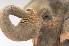 Particolare capo dell'elefante Immagini Stock