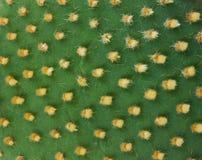 Particolare del cactus Fotografia Stock