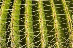 Particolare del cactus Fotografie Stock Libere da Diritti