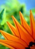 Particolare del fiore Immagine Stock Libera da Diritti