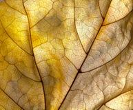 Particolare del foglio di autunno Immagini Stock