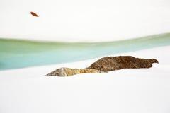 Particolare del ghiacciaio Fotografie Stock Libere da Diritti