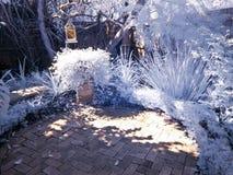 Particolare del giardino nel infrared Fotografia Stock Libera da Diritti