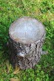 Taglio del tronco di albero Fotografia Stock