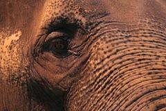 Particolare dell'elefante asiatico Immagini Stock Libere da Diritti