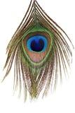 Particolare dell'occhio della piuma del pavone Fotografia Stock