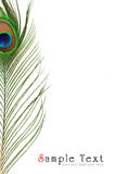 Particolare dell'occhio della piuma del pavone Fotografie Stock Libere da Diritti