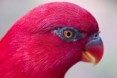 Particolare dell'uccello Immagini Stock