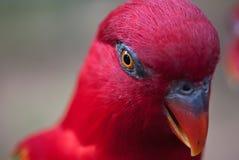 Particolare dell'uccello Fotografia Stock Libera da Diritti