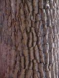 Particolare della corteccia di albero Immagini Stock