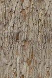 Particolare della corteccia di albero - tileable Fotografie Stock