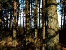 Particolare della foresta Fotografia Stock Libera da Diritti