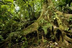 Particolare della foresta pluviale Fotografia Stock