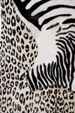 Particolare della pelle della zebra Fotografia Stock Libera da Diritti