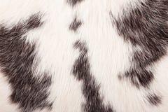 Particolare della pelliccia del coniglio Immagini Stock Libere da Diritti