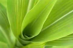 Particolare della pianta di cereale Fotografia Stock