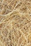 Particolare della priorità bassa del fieno dell'erba asciutta Fotografie Stock Libere da Diritti