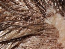 Particolare della tintura di capelli fotografie stock libere da diritti