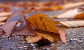 Particolare della via di autunno Fotografia Stock Libera da Diritti
