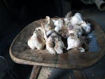 Particolare di aglio Immagini Stock
